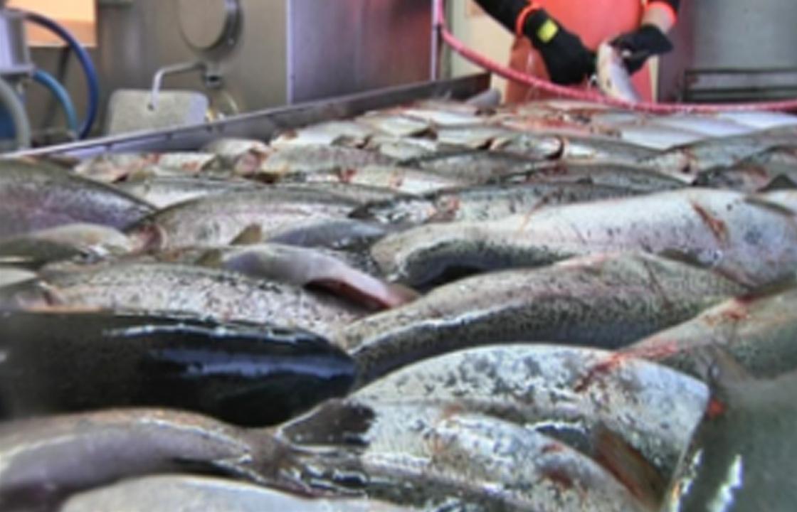 Kalankäsittelyssä tarvitaan puhdasta vettä